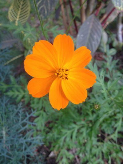 Jardín botánico de Trujillo-Perú Flowers