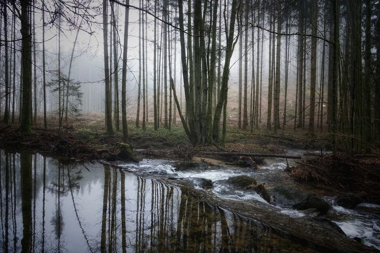wasserlauf Tree