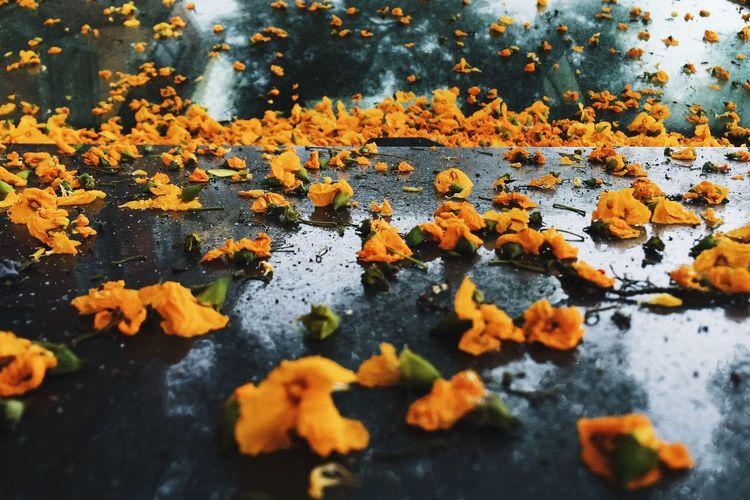 itRainedLastNight Vscocam EyeEm Best Edits EyeEm Best Shots Colors Streetphotography Walking Around