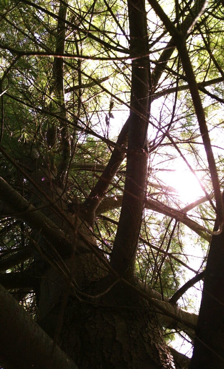 tree, low angle view, nature, day, tree trunk, branch, growth, forest, tranquility, beauty in nature, tranquil scene, no people, sunlight, outdoors, scenics, sky
