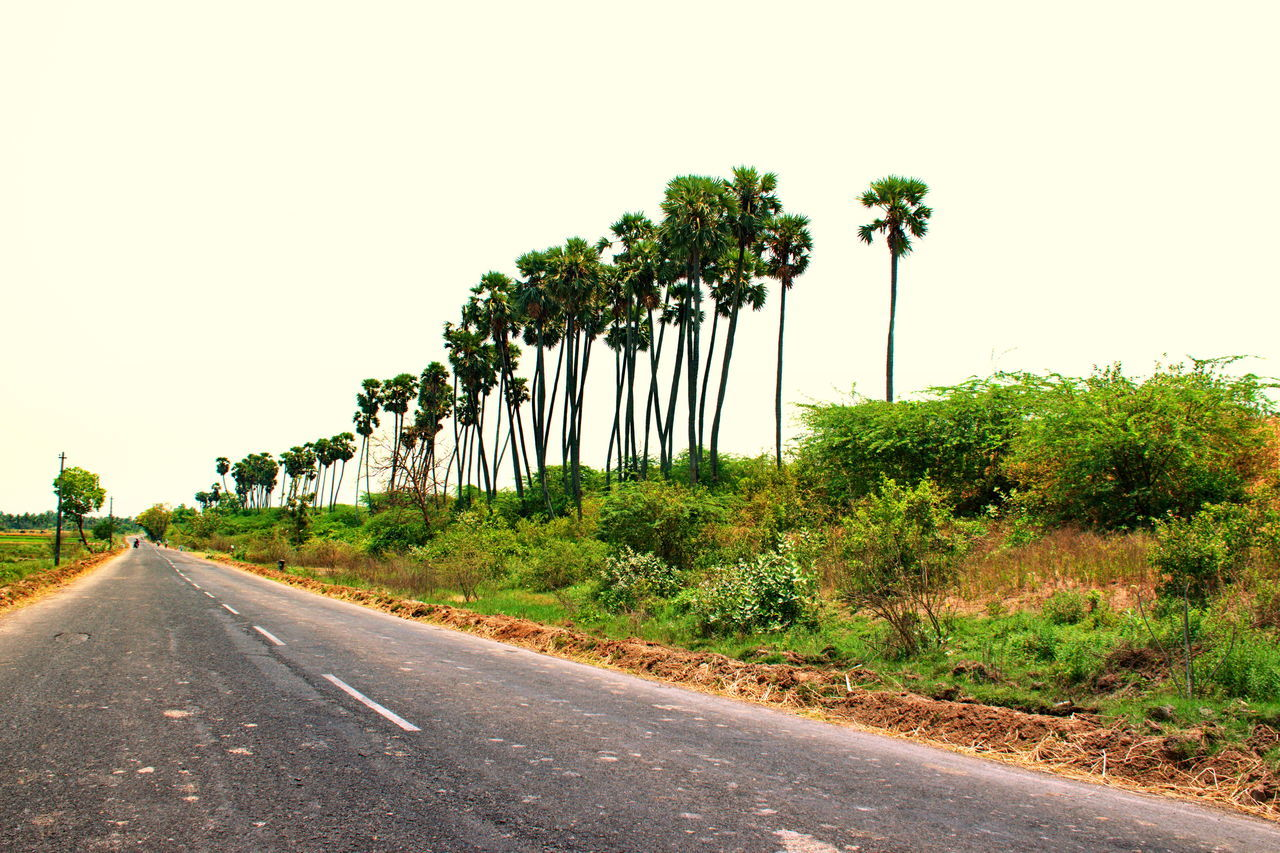 road, the way forward, clear sky, tree, transportation, no people, day, nature, outdoors, sky