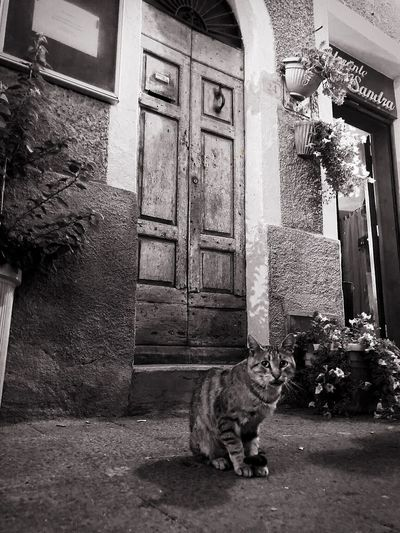 Toscana Cat Building Exterior Architecture Built Structure Building Day Entrance No People Street Rear View Domestic Animals Domestic Door City Pets Mammal Outdoors One Animal Sunlight Nature