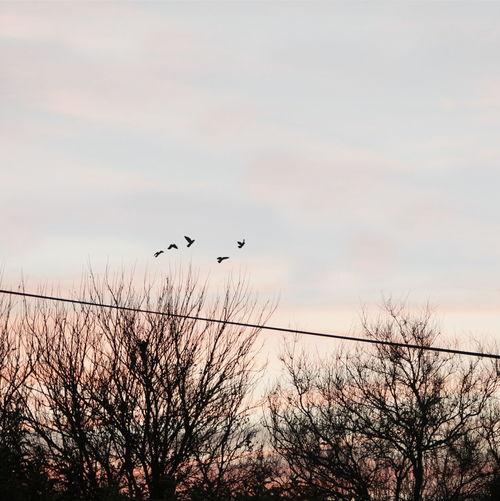 Low angle view of birds flying over bare trees