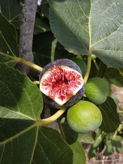 Higos, frutos