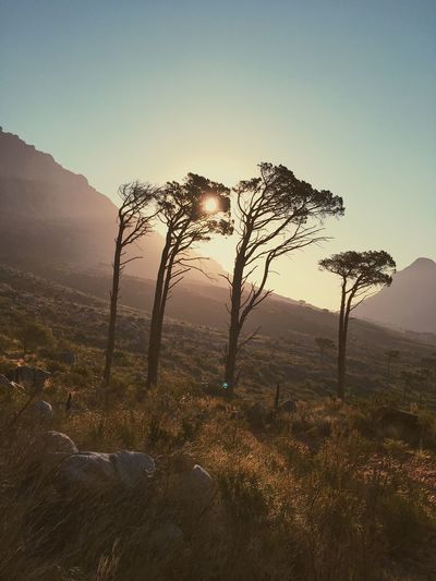 Hiking in Cape Town. Beauty In Nature Clear Sky Day Grass Landscape Mountain Nature No People Non-urban Scene Outdoors Scenics Sky Sunset Tranquil Scene Tranquility Tree