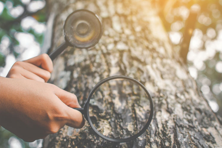 Low angle cropped hands of people holding magnifying glass by tree in forest