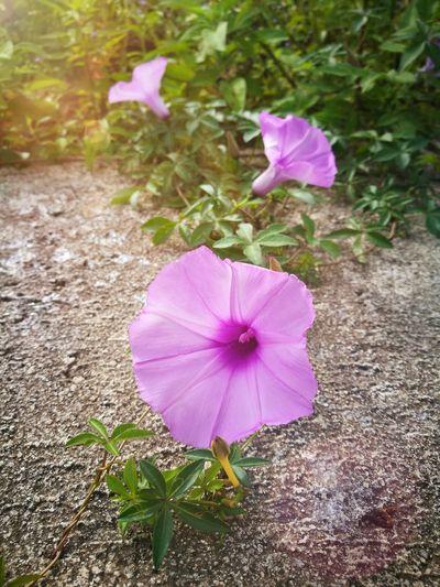 Flawer🌸 Natural Green Beautiful Nature Millennial Pink