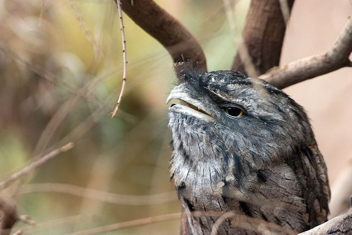 Animal Animal Themes Animal Wildlife Animals In The Wild Beak Bird Branch Close-up Day Focus On Foreground Nature No People One Animal Outdoors Perching Plant Selective Focus Sunlight Tree Vertebrate