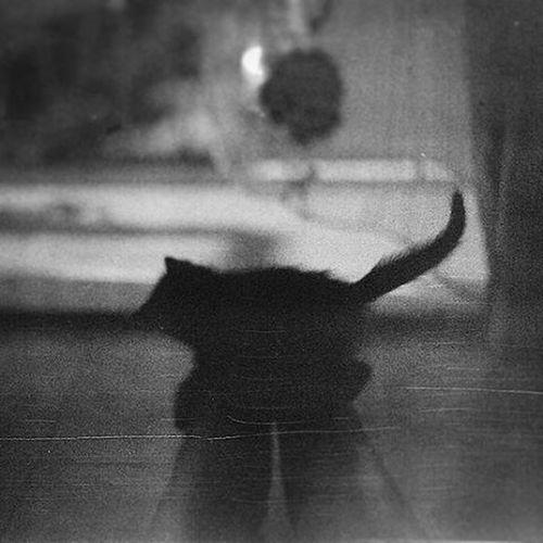 Cat relaxing in the dark