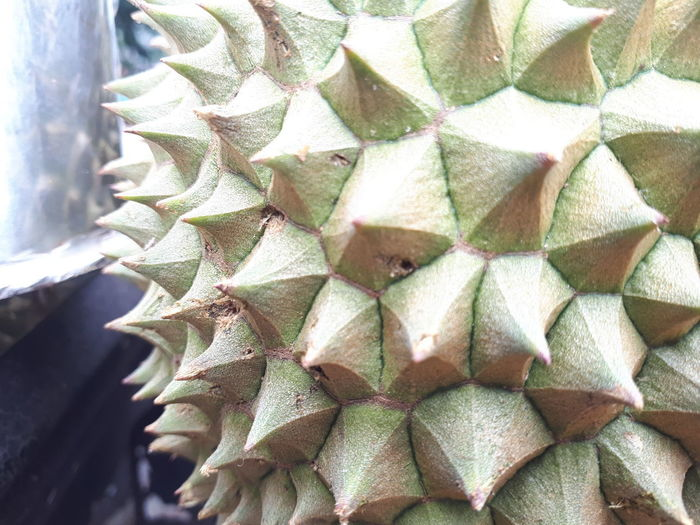 Cactus Full Frame Spiked Close-up Food And Drink Prickly Pear Cactus Saguaro Cactus Tucson Needle - Plant Part Pine Cone Pinaceae Spiky Pine Tree Thorn Barrel Cactus Cocoon Succulent Plant Sharp Aloe Vera Plant For Sale Stall Fish Market