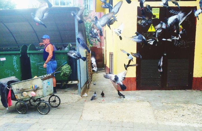 Flying Away Pigeons In Flight Pigeons Pigeon Bird  This Is LIFE Work Respect Working Man Urban View Urban Life Urban Nature Urban Fauna Nice Moments Catch The Moment Catching The Moment Simple Things In Life Simple Moments Life Style We Are One People Job Trash Garbage Trash Is Treasured