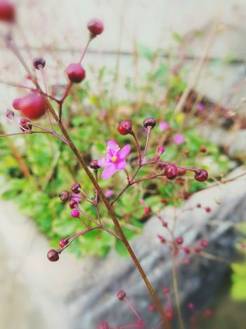 Flower Beauty In Nature Freshness Focus On Foreground No People Close-up Pink Color Plant