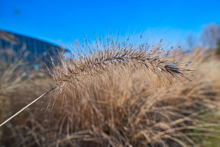 Plant Field Nature Land Crop  Cereal Plant Landscape Sky No People Close-up Agriculture Growth Rural Scene Beauty In Nature Grass Blue Day Focus On Foreground Environment Tranquility Outdoors