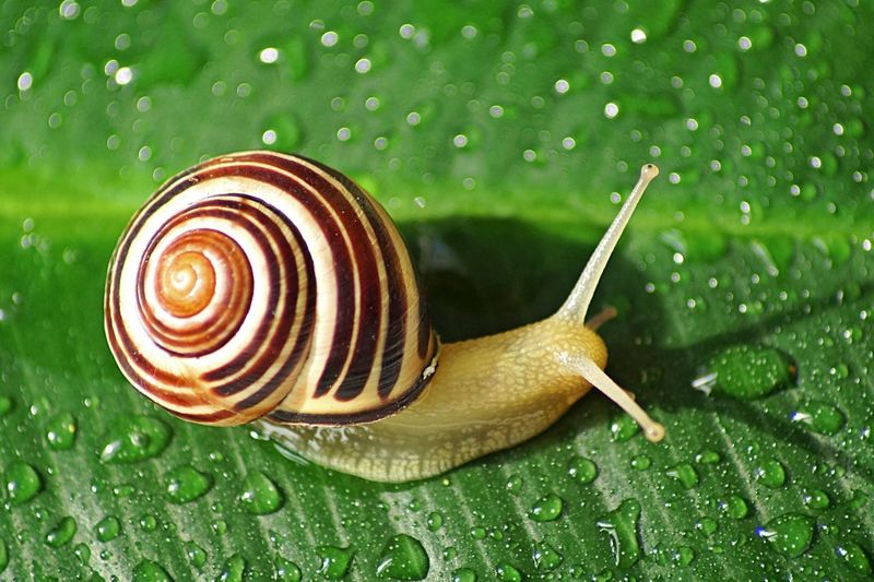 High angle view of snail on wet leaf