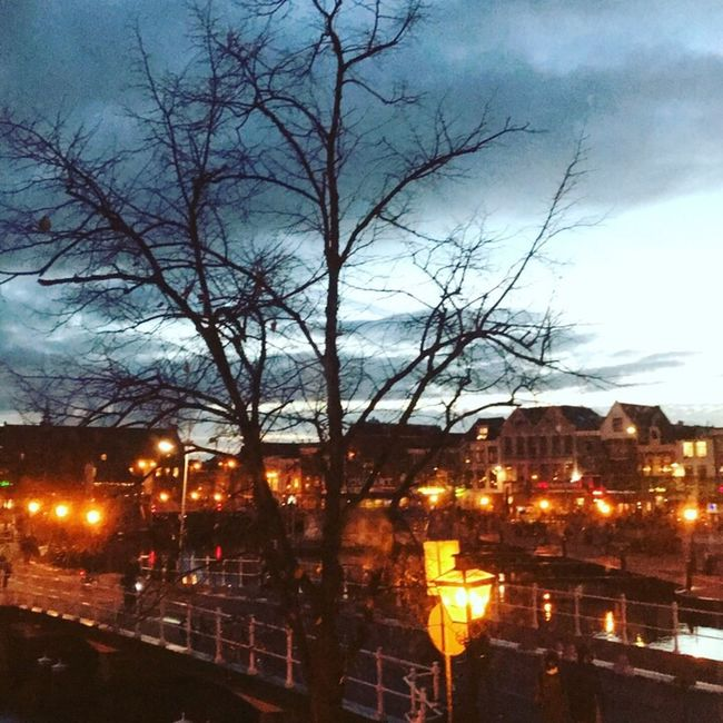 Tree Sky Street Light City