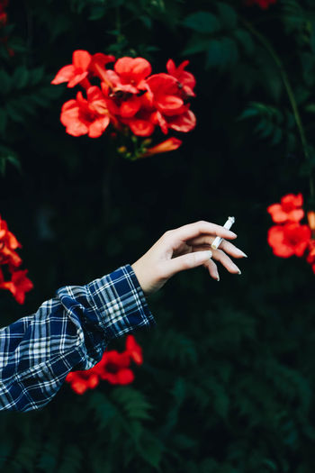Cropped hand of woman holding cigarette by flowering plant