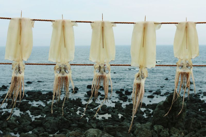 Squids hanging on rope against sea
