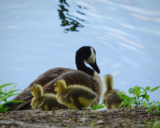 Family Animal