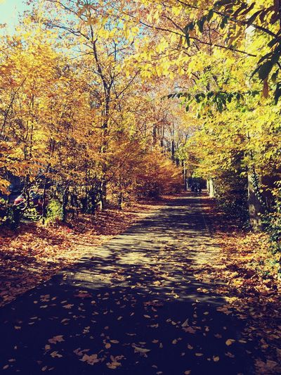 Autumn Colors Autumn Leaves Autumn Road Hanging Out Hello World Jogging Walking Around Lyon Nature Enjoying Life