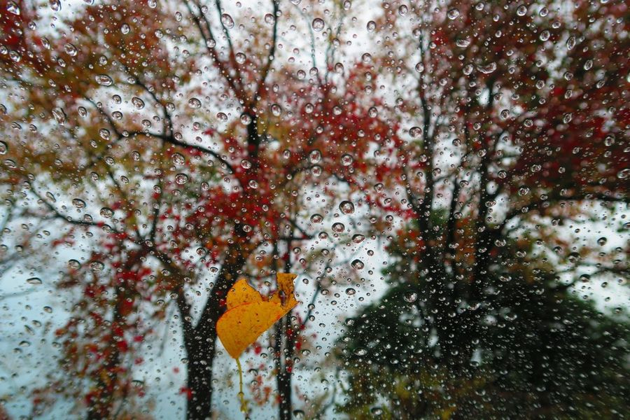 水玉  水滴 紅葉 多布施川公園 Japan Saga Nature Rain Window No People Beauty In Nature Reaf Autumn Trees Outdoors Red Day Tree