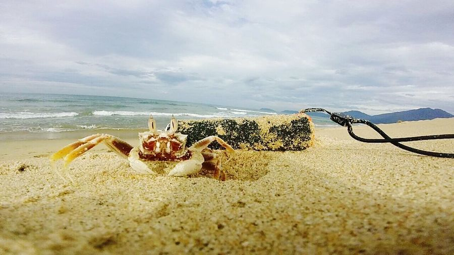 Crab Seaside