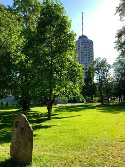 Trees in park with buildings in background