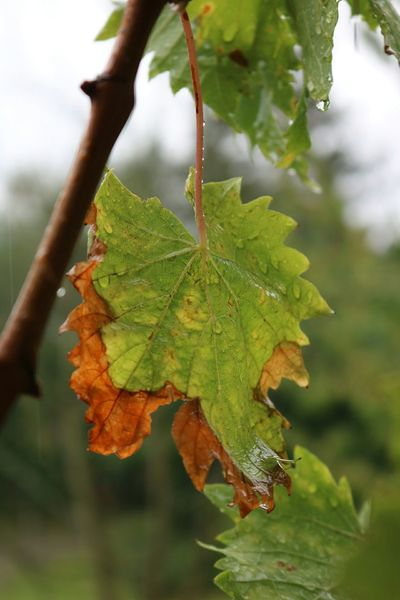 Autumn Leaf Learn & Shoot: Layering Autumn2015 Autumn Colors Autumn Colours Herzogenrath My Best Photo 2015