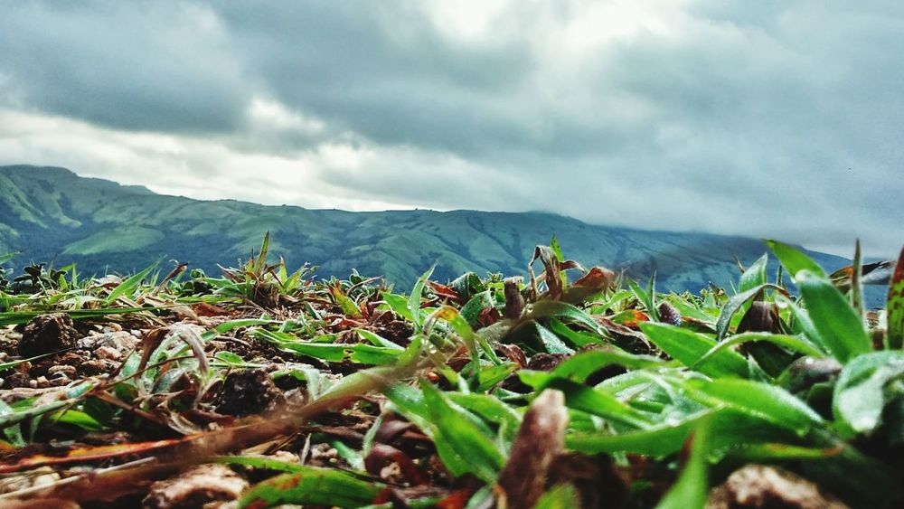 Close-up Grass Mountains Greenery Monsoons Cloudy Heights Lush Green Mountains EyeEmNewHere
