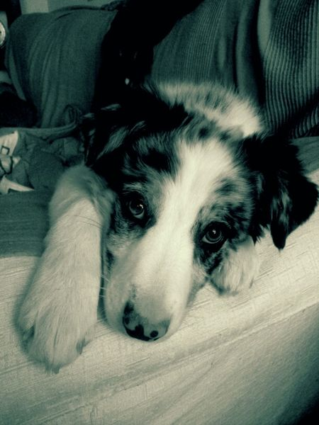 Blackandwhite Dog Love My Dog My Little Puppy A Dogs Life Movilgrafias Priceless
