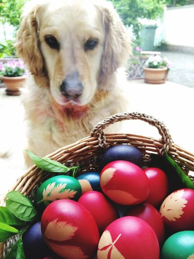 Egg Beautiful Ornate Style Culture Traditional Culture Traditional Easter Ready Easter Eggs Easter Flowers Design Nature Still Life EyeEm Nature Lover Flower Dog Cute Cute Pets Domestic Animals Dogs Animal Themes Love