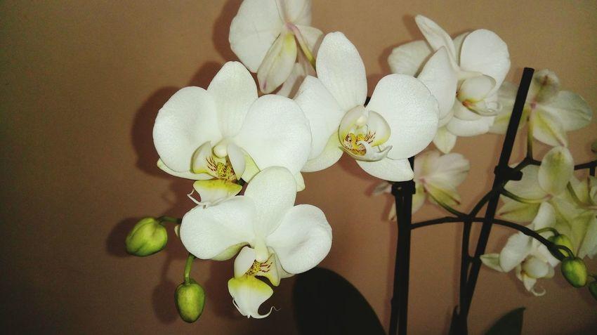 Flower Orchid Kwiat Beauty In Nature Nature Kwiaty Beauty