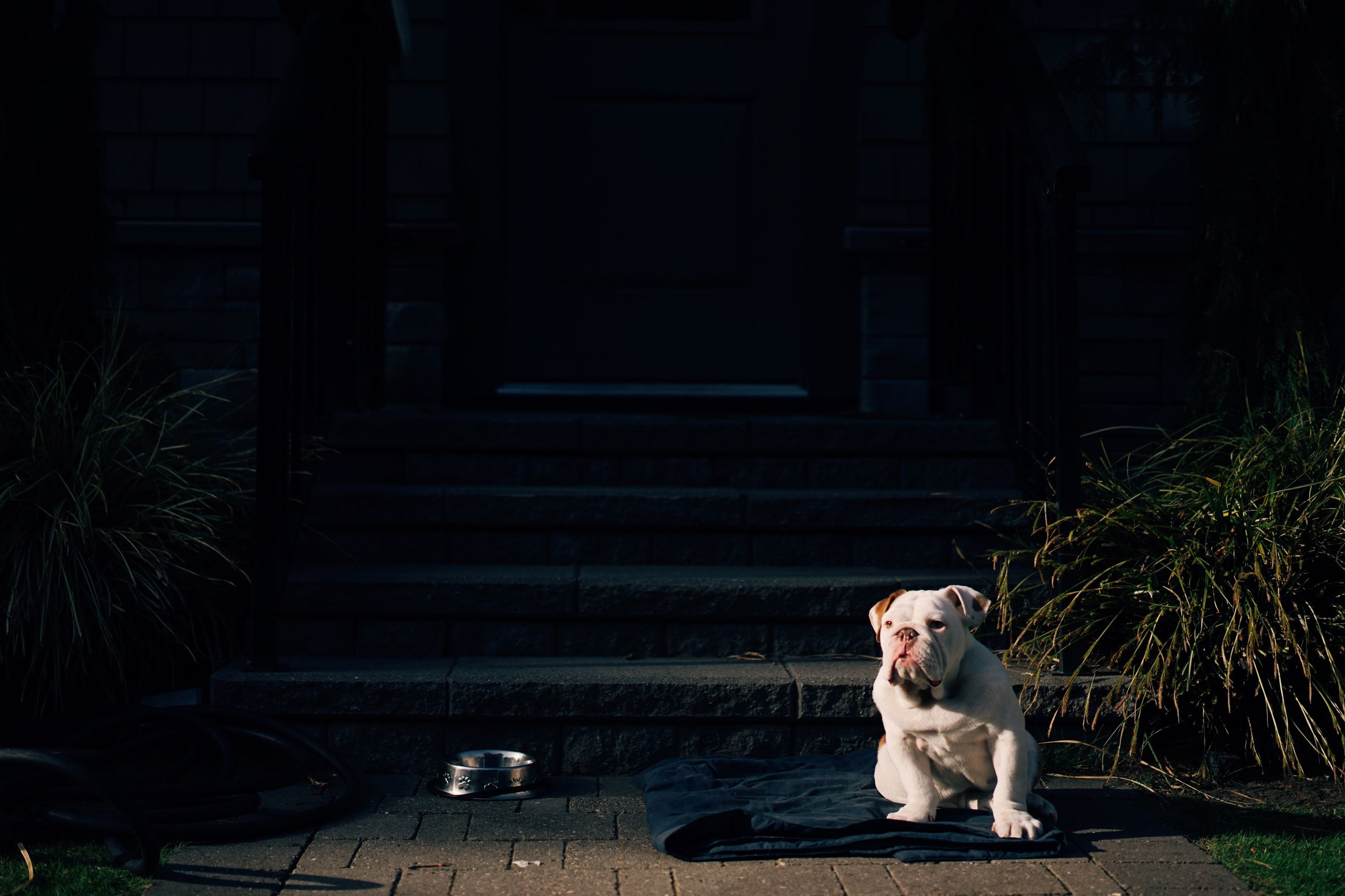 pets, domestic animals, mammal, one animal, animal themes, dog, domestic cat, cat, sitting, built structure, architecture, building exterior, feline, full length, looking at camera, relaxation, street, outdoors, portrait