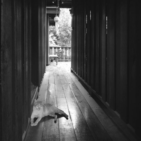 Thaicats Cat Lovers Shades Of Grey Shadow And Light Shadows And Sunlight Black & White Photography Blackandwhitephoto Ancient City Thai Architecture Felling Architecture Photography Thailand HomeAlone