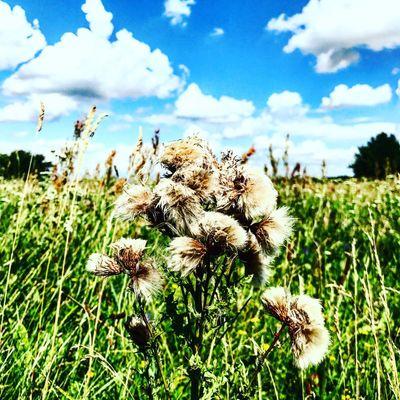 Flowers🌿🌱 Flower Beutiful  Heaven Cloud Breathing Space Be. Ready.