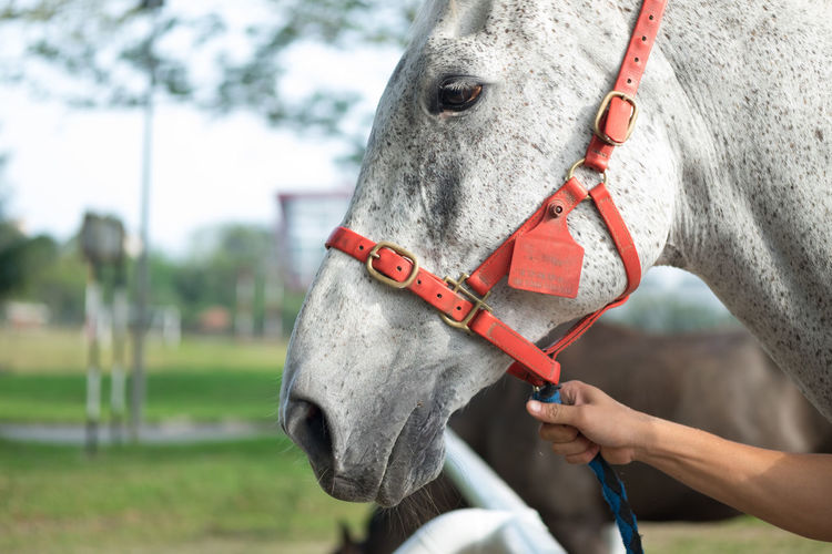 Equine Horses Animal Themes Bridle Close-up Competition Day Domestic Animals Field Focus On Foreground Horse Horse Racing Horseback Riding Human Body Part Human Hand Livestock Mammal One Animal One Person Outdoors Real People