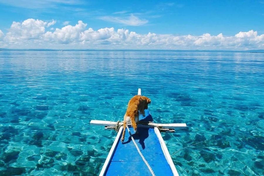 Sea Nautical Vessel Blue Reflection Water Outdoors Cloud - Sky Nature Sky Beauty In Nature Landscape Day Beach Dog Beach Dog Horizon Over Water Summer Vacations Life Is A Beach EyeEm Nature Lover Eyeem Philippines Philippines Beauty Travel Travel Destinations