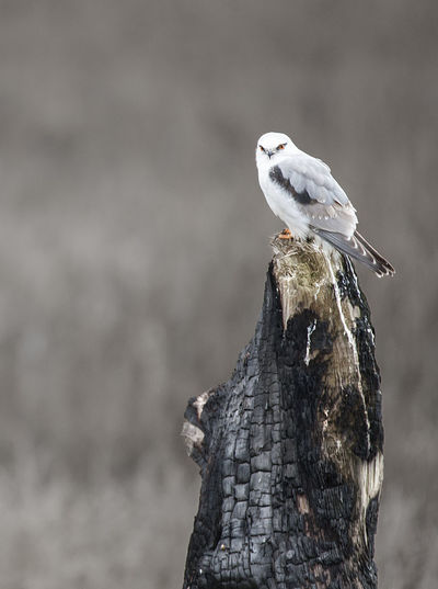 Bird perching on burnt wood