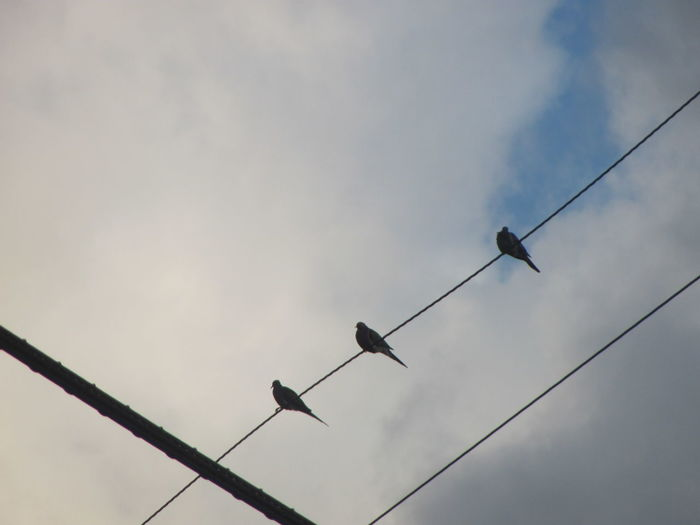 three little birds 3LittleBirds Birds Cables Cloudy Outdoors Perching Sky Three