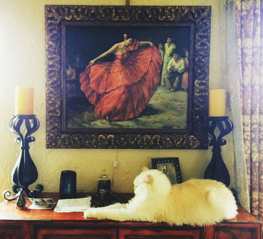 Pets One Animal Indoors  Animal Themes No People Domestic Cat Domestic Animals Old-fashioned Persian Cat  Interior Design Living Room Cats Of EyeEm Aristocats Livingroom