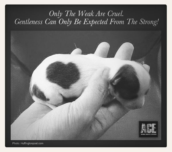 How generous and magnificent never put your strength on the weak for superiority Caring Puppy The Power Of Love Be A Hero
