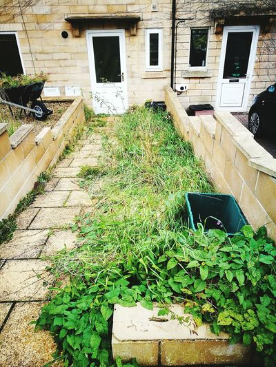 Neglected Garden Path Front Door To House Messy Garden Path Messy Entrance To House Built Structure Building Exterior Day Outdoors House No People Plant Growth Grass Unmowed Lawn Neglected Lawn Overgrown Garden Run Down Garden Wheel Barrow Gardening Weeding Garden Restoration
