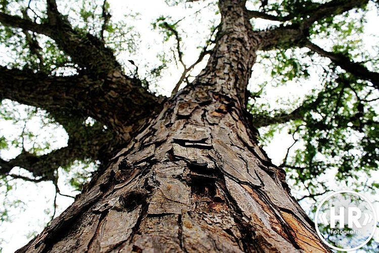 Paisaje Natural árbol Tree Popular Photos