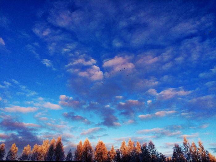 Luonto Saarijärvi Nature_collection Winter Clouds
