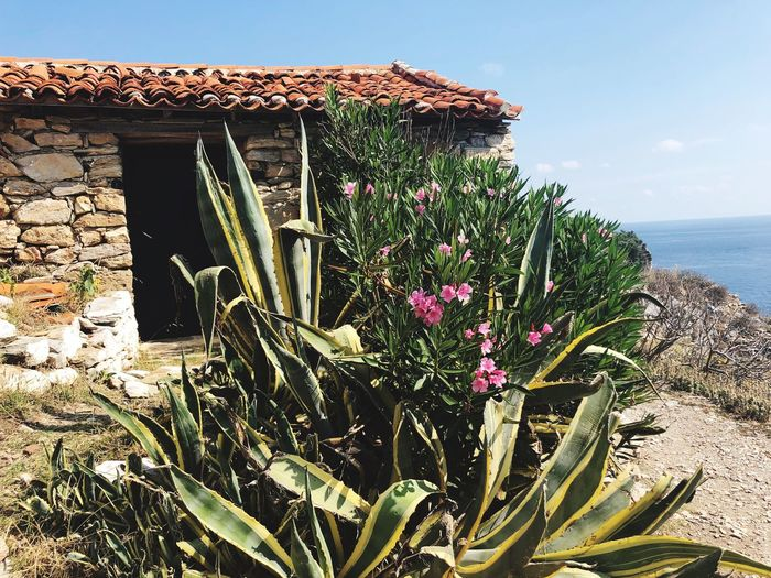 Flowering plants by sea and building against sky