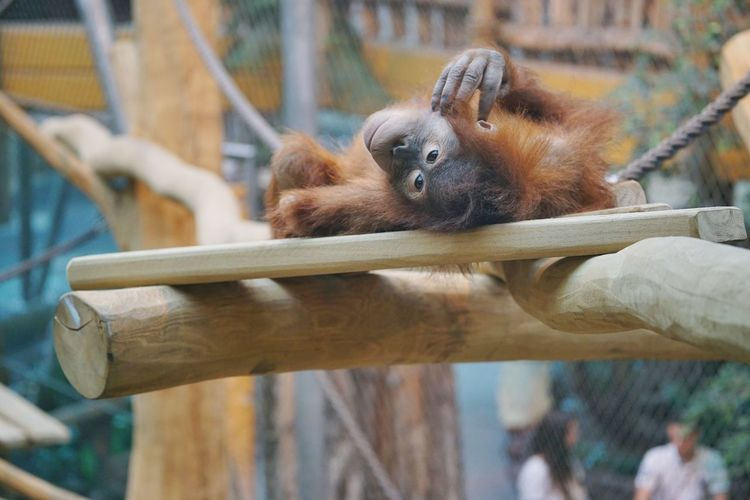 Monkey Life Zoo