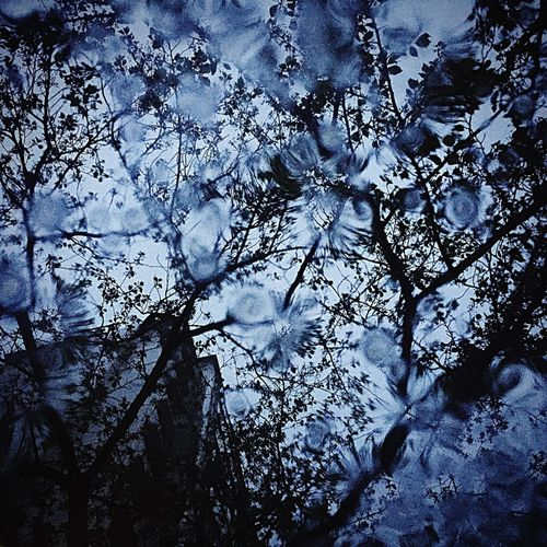Rain Rainy Day Rain Drops Drop Flowers Water Flowers Sky Tree