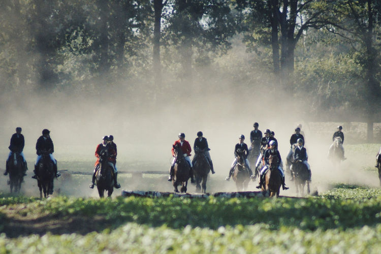 Group of people riding horses on field against trees