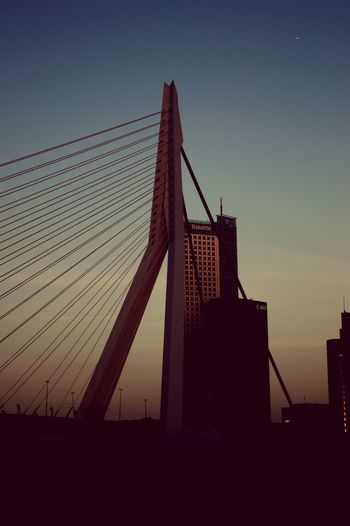 Icon Erasmusbrug Bridge - Man Made Structure Sky Building Exterior Low Angle View No People Nature City Tall - High Dusk Outdoors Silhouette Clear Sky Sunset