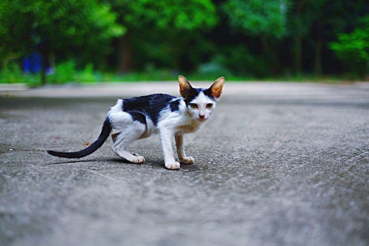 Portrait of stray kitten on road