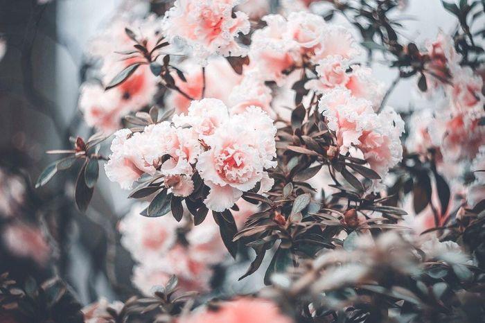 Natureza 🐦🌳 NaturezaMaravilhosa Natureza🍁 Naturezaperfeita Lindas ❤️ Floresent